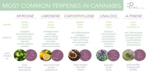Terpenes in the hemp plant