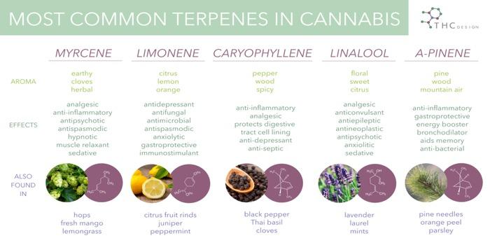 Terpenes in the hemp plant